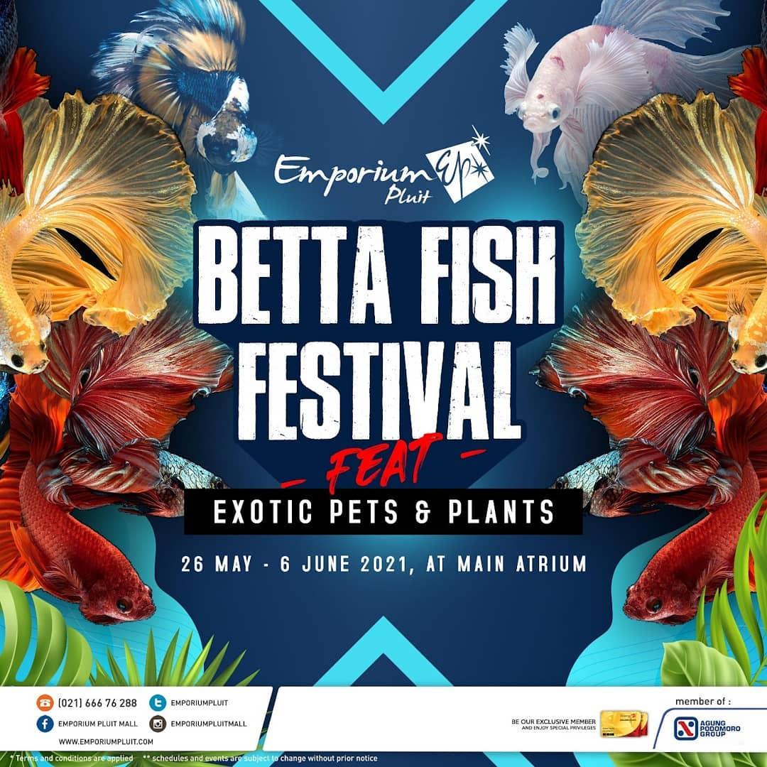 BETTA FISH FESTIVAL feat Exotic Pets & Plants
